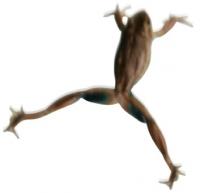 frog_jump61.jpg